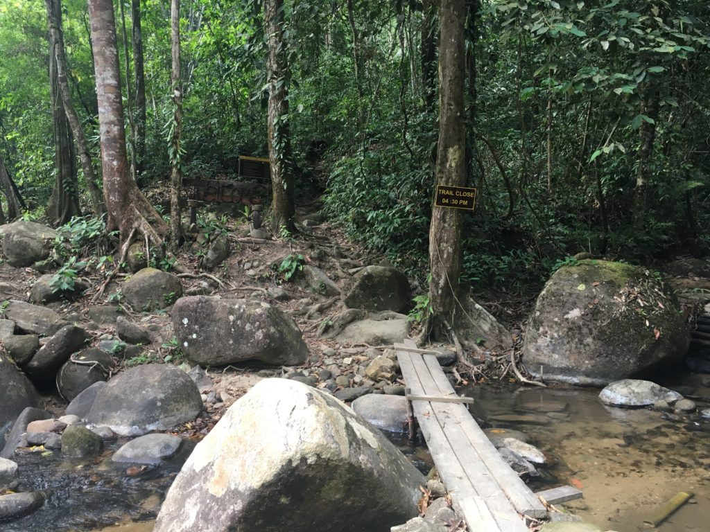Khao Sok Regenwald
